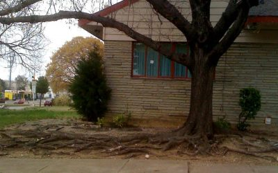 Tree Root Barriers to Prevent Foundation Repair