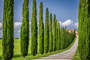 Selecting Trees Ideal for Your Home Foundation